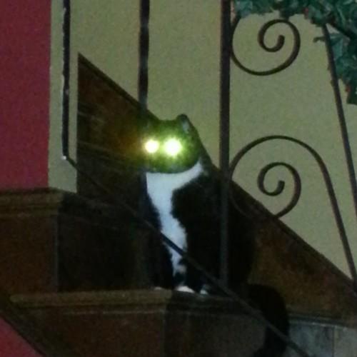 Gary laser eyes